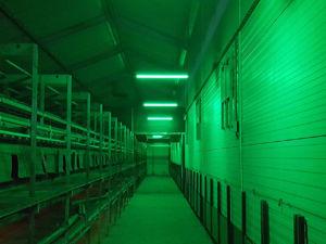 MULTICOLOR LED-VERLICHTING | Groen | Veko Ventilatie B.V.
